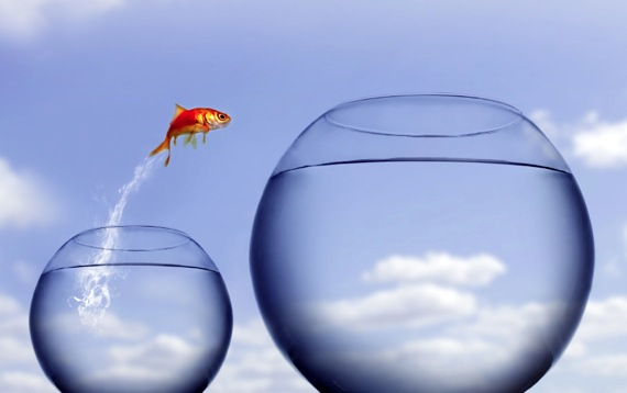 fish jumping into a bigger bowl demonstrating how a business evolves with a parts management system